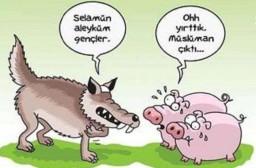 Müslüman Tilki